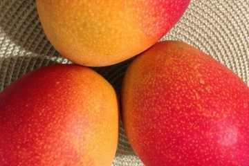 Thermomix Mango Smoothie Header